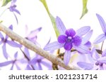 beautyful purple wreath vine or ... | Shutterstock . vector #1021231714