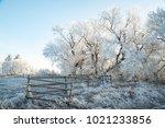 Alberta  Canada.  Frost On...