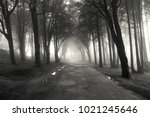 path in a forest covered with... | Shutterstock . vector #1021245646