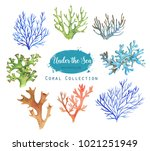 hand drawn watercolor... | Shutterstock . vector #1021251949