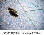 A Dead Bird On Pavement In The...
