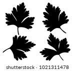 parsley isolated on white black ... | Shutterstock .eps vector #1021311478