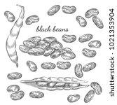 black beans hand drawn sketch... | Shutterstock .eps vector #1021353904