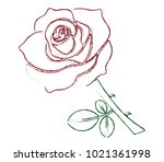 red rose with green leaves ...   Shutterstock .eps vector #1021361998