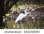 great white egret in kakadu... | Shutterstock . vector #102140050