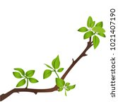 Illustration Of A Branch On...