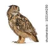 Stock photo eurasian eagle owl bubo bubo a species of eagle owl standing in front of white background 102144250