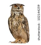 Stock photo eurasian eagle owl bubo bubo a species of eagle owl standing in front of white background 102144259