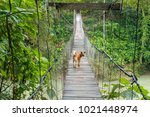 dog walking on the suspension... | Shutterstock . vector #1021448974