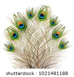Peacock Feathers On A White...