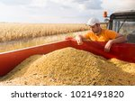 farmer holding soy beans after... | Shutterstock . vector #1021491820