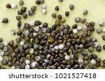 job's tears   coix lachryma... | Shutterstock . vector #1021527418