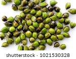 job's tears   coix lachryma... | Shutterstock . vector #1021530328