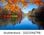 the beautiful maple season at... | Shutterstock . vector #1021546798