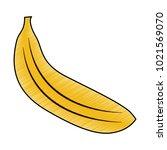tropical fruit tasty banana... | Shutterstock .eps vector #1021569070