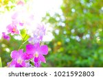 colorful orchid flower... | Shutterstock . vector #1021592803