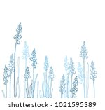 muscari   spring flowers with a ... | Shutterstock .eps vector #1021595389