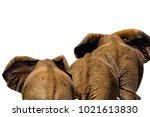 african elephants isolated on... | Shutterstock . vector #1021613830
