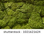 moss on rock wall in old temple.... | Shutterstock . vector #1021621624