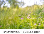 background of a meadow in the... | Shutterstock . vector #1021661884