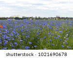 view over a meadow with... | Shutterstock . vector #1021690678