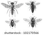 bee collection   1. european... | Shutterstock .eps vector #102170566