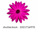 Stock photo pink water lily isolated 1021716970