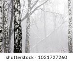 winter thick forest in a thick... | Shutterstock . vector #1021727260