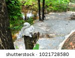 Squirrel Stone Handicraft...