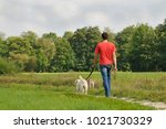 Stock photo man is walking with dogs 1021730329