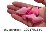 Stock photo rose petal on a palm of hand 1021751860