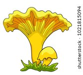 the is  natural chanterelle... | Shutterstock .eps vector #1021815094
