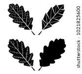 oak leaf. vector illustration. | Shutterstock .eps vector #1021825600