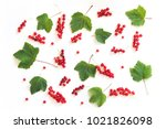 red currant on branch and... | Shutterstock . vector #1021826098