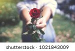 Stock photo young male giving a red rose to girlfriend in valentine s day couple love concept 1021843009