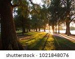 Fairmount Park Riverside California Sunlight breaking through the trees