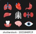 internal organs of the human... | Shutterstock .eps vector #1021848919