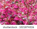 colorful background macro... | Shutterstock . vector #1021874326
