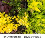 different flowers  on the... | Shutterstock . vector #1021894018