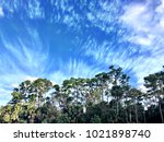 florida swamp landscape and... | Shutterstock . vector #1021898740