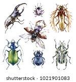 watercolor beetles collection...   Shutterstock . vector #1021901083