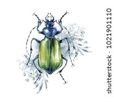 watercolor beetle on a floral... | Shutterstock . vector #1021901110