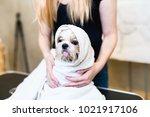 shih tzu dog at grooming salon... | Shutterstock . vector #1021917106