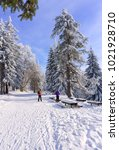 Small photo of Two women cross country skiers are resting on the route. Tall lonely pine tree growing on a hill by the road. Hoary trees, blue sky and sunlight. Winter mountain landscape.