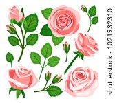 set of pink roses | Shutterstock .eps vector #1021932310