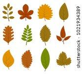 set of twelve different autumn... | Shutterstock . vector #1021934389