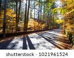 the beautiful maple season at... | Shutterstock . vector #1021961524