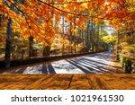 the beautiful maple season at... | Shutterstock . vector #1021961530