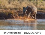 young elephant playing in mud... | Shutterstock . vector #1022007349