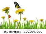 yellow dandelion flowers with... | Shutterstock . vector #1022047030